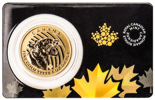 RCM 1 oz Cougar Gold Coin Pack Front